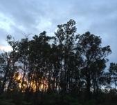 ohia_sunrise-akua