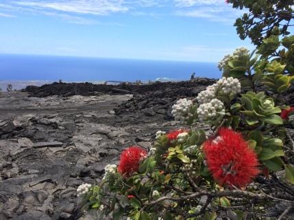 Hōlei Pali with lehua towards ʻĀpua
